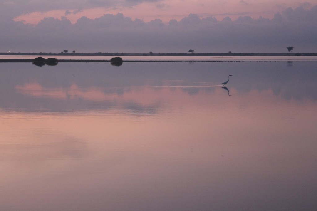 Heron in tranquil waters. Serangan Island at dawn.