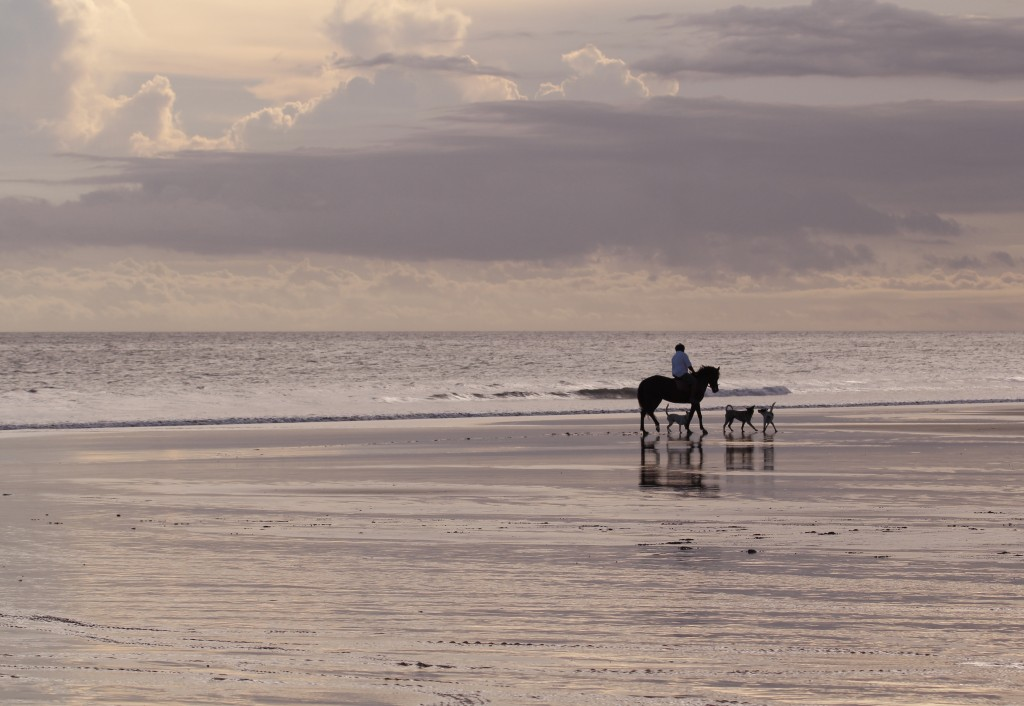 Horse and dogs on beach 2015-06-03 16.51.16